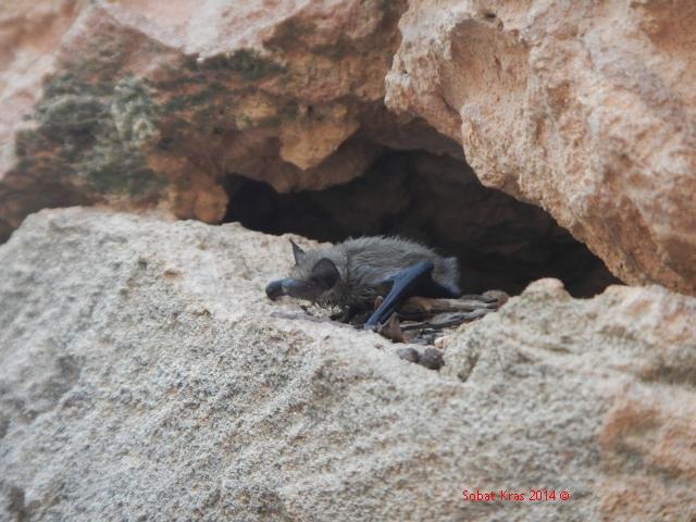Vleermuis rescue