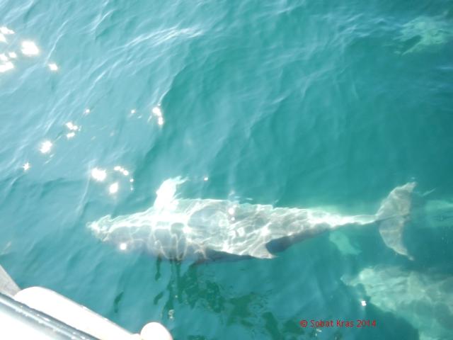 Eindelijk een dolfijn