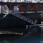 Laag water Marina Real A Coruna