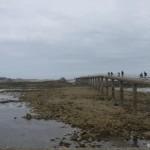 Roscoff pier laag water